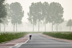 Ready for take off (Sjaco Manuputty) Tags: road street trees bird animal landscape takeoff netherlands early earlymorning fog foggy