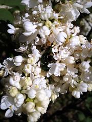 Beetle (Anna Gelashvili) Tags: beetle жук insect насекомые цветок ყვავილები ყვავილი ხოჭო цветы flowers garden цветочки macro flower макрос