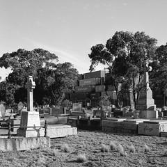Footscray Cemetery (mr_student) Tags: bronica sqai fuji neopan acros 100 rodinal 150 20c 13min