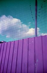 What floats beyond (ale2000) Tags: 100 35mm lca lomochrome lomochromenewpurple lomography purple analog analogphotography analogue colorshift film fotografiaanalogica pellicola newlomochromepurple400 filmisnotdead believeinfilm shifted colorshifting viola clouds fluffyclouds greensky wall barrier muro nubi nuvole cielo float floating fence net rete suburbia periferia cage caged gabbia prigione prigionia urban