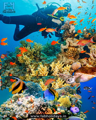 😍🌊Let's Go Scuba Diving in Malaysia! 3 Best Locations🌊😍 (fabholidays) Tags: