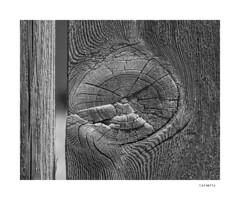 Calamity (agianelo) Tags: weathered wood grain knot monochrome bw bn blackandwhite