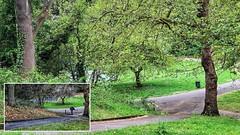 Blow Up – Maryon Park … (marc.barrot) Tags: shotoniphone montage trees landscape park filmlocation michaelangeloantonioni blowup uk se7 london woolwich eastgreenwich charlton maryonpark