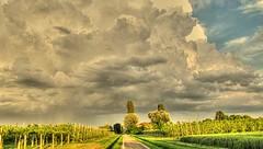 * Il Cielo a maggio * (argia world 1) Tags: pianurapadana modena paesaggicampestri strada campi fields alberi trees alberidafrutto cielo sky nuvole clouds stormy raining temporale pioggia argiagranuzzo
