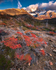 Autumn (Jirawatfoto) Tags: fitz roy argentina autumn patagonia landscape view mount park beautiful nature chalten peak travel national snow scenic blue el scenery sky tree tourism mountain forest mountains fitzroy andes outdoors