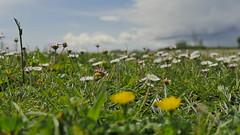 Parco (eshao5721) Tags: erba fiori cieloblu