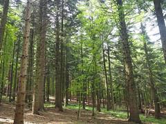 Las Wald forest (arjuna_zbycho) Tags: las wald forest natur drzewa świątyniaprzyrody natura woods dendroterapia uzdrawiającamoclasu leczniczaenergiadrzewiroślin drzewapoprawiająsamopoczucieidziałająleczniczo zufusindenwald spacerpolesie walkinthewoods spazierendurchderwald walkingthroughtheforest spacerkiempolesie