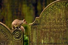 Saint James Gardens and cemetery, Liverpool. (Blaise Olivier) Tags: liverpool merseyside ville city unitedkingdom england cimetière cemetery tomb tombe écureuil treesquirrel
