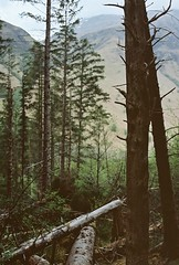 Fallen Ones (Mano Green) Tags: trees mountains fallen forest forestry plantation glen nevis fort william scotland uk may spring 2016 canon eos 300 40mm lens kodak portra 160 35mm film colour