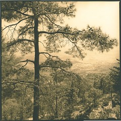 Pine view lith (Mark Dries) Tags: markguitarphoto markdries darkroomprint darkroom lith lithprinting hasselblad500cm cyprus 2018 6x6 mediumformat film ilfordfp4