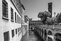 A moment of Mantova (Luca Nacchio) Tags: città mantova canali bianco nero lombardia italia italy fotografia istante piccione city channel white black photography pigeon capture