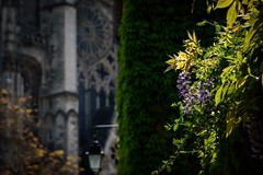 Spring Road to Faith (NathalieSt) Tags: bourges europe france city nikon nikond750 nikonpassion nikonphotography rue street streetphotography ville