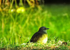 La paz del pajaro (carlos_ar2000) Tags: picabuey ave pajaro bird naturaleza nature animal sombra shadow dof palermo buenosaires argentina