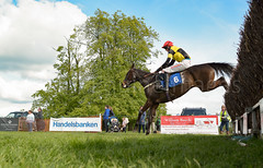 Race 6 BONUS - Pelegrine Falcon-2 (JTW Equine Images) Tags: p2p point pointtopoint knutsford cheshire tabley nh racing horse equine jockey trainer jumps