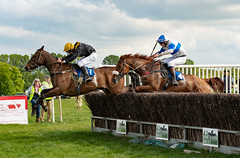 Race 6 - Rules Of War-10 (JTW Equine Images) Tags: p2p point pointtopoint knutsford cheshire tabley nh racing horse equine jockey trainer jumps
