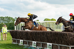 Race 6 - Rules Of War-8 (JTW Equine Images) Tags: p2p point pointtopoint knutsford cheshire tabley nh racing horse equine jockey trainer jumps