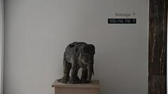 Hotel Elephant (manni0656) Tags: hotel elephant