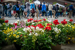 Flower Baskets (Phil Roeder) Tags: desmoines iowa leica leicax2 flowers flower bloom blossom farmersmarket downtownfarmersmarket