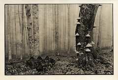*** (Taras Perun) Tags: altprocess alternativephotography lithprint