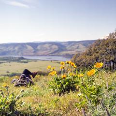 C'mon..... (Aaron Bieleck) Tags: hasselblad500cm 120film analog 6x6 square film filmisnotdead hasselblad mediumformat wlvf 60mmct rowenacrest balsamroot sarah outdoors hiking pnw pacificnorthwest columbiarivergorgeoregonflowerswildflowersfuji pro 160s