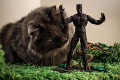 Black Panther/Grey Panther (catandtonic) Tags: blackpanther marvel actionfigure animal calgary cat pet sora toy