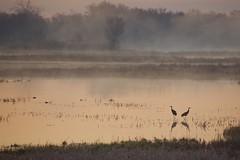 Minnesota Morning (finlander13) Tags: minnesota wetlands sherburnenationalwildliferefuge exploremn exploresherburne exploreminnesota scenery sunrise nature wildlife trumpeterswans sandhillcranes
