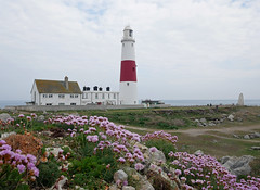 Portland Bill and sea thrift (auroradawn61) Tags: portlandbill weymouthandportland lighthouse dorset coast uk england cloudy thrift flowers lumixgx80 rocky