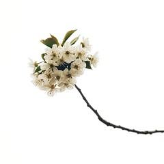 Week 18 Shoot Spring (Carol Dunham) Tags: projectsunday spring blossom