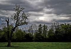 (Fay2603) Tags: baum natur landschaft landscape badenwürttemberg schwäbisch gmünd bäume trees alberi wolken clouds nuvole himmel sky