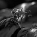 Raspberry flower (054-A01)