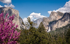 So much beauty (alicecahill) Tags: bridalveilfall california spring ©alicecahill landscape yosemite ca yosemitenationalpark nationalpark elcapitan halfdome sony yosemitevalley 2019 redbud tunnelview