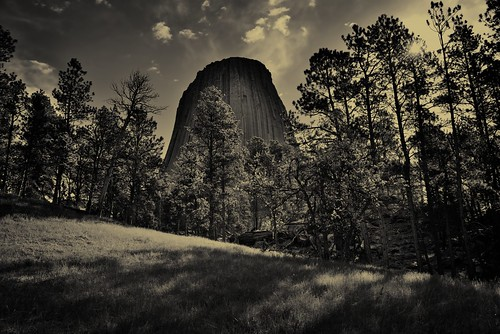 Devils Tower (Bear Lodge) Rising Above a Nearby Forest (Black & White)