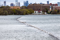 2019 Lake Ontario flooding - birds on submerged breakwall May 20 (jer1961) Tags: toronto flood flooding 2019flooding lakeontario lakeontarioflooding 2019lakeontarioflooding torontoflooding 2019torontoflooding humberbay sunnysidebeach sunnysidebeachflooding 2019sunnysidebeachflooding