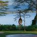 A Visitor at Breakfast, Elsamere Lodge, Naivasha