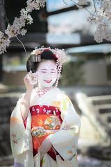 Maiko_20190409_121_13 (Maiko & Geiko) Tags: 20190409 myokenji temple kanohisa kyoto maiko 舞妓 妙顕寺 叶久 京都 叶家 kanoya ksumika