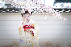 Maiko_20190409_121_25 (Maiko & Geiko) Tags: 20190409 myokenji temple kanohisa kyoto maiko 舞妓 妙顕寺 叶久 京都 叶家 kanoya ksumika