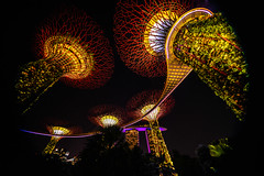 Singapore - 147 (coopertje) Tags: singapore asia azie gardensbythebay marina bay sands hotel casino mall park garden tree giant enormous artificial architecture lights evening dark nightshot supertreegrove lightshow laser