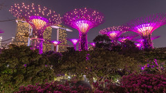 Singapore - 145 (coopertje) Tags: singapore asia azie gardensbythebay marina bay sands hotel casino mall park garden tree giant enormous artificial architecture lights evening dark nightshot supertreegrove lightshow laser