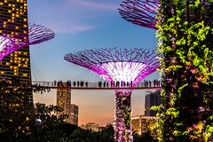 Singapore - 141 (coopertje) Tags: singapore asia azie gardensbythebay marina bay sands hotel casino mall park garden tree giant enormous artificial architecture lights evening dark nightshot supertreegrove lightshow laser
