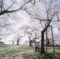 0923-04 (karl0513) Tags: film filmphotography filmisnotdead sakura japan 120film mamiya6mf