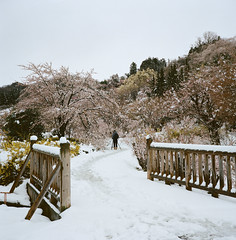 1202-08 (karl0513) Tags: film filmphotography filmisnotdead sakura japan 120film mamiya6mf