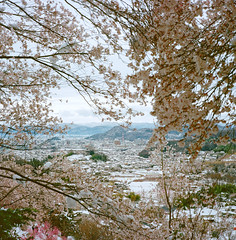 1202-04 (karl0513) Tags: film filmphotography filmisnotdead sakura japan 120film mamiya6mf