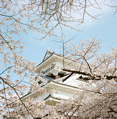 1201-06 (karl0513) Tags: film filmphotography filmisnotdead sakura japan 120film mamiya6mf