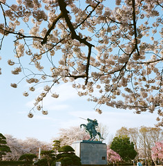 1201-03 (karl0513) Tags: film filmphotography filmisnotdead sakura japan 120film mamiya6mf