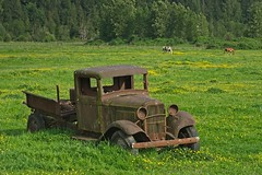 Rusted Jalopy Field Horses 5008 A (jim.choate59) Tags: jchoate on1pics rust oldcar jalopy horses antique field landscape washingtonstate enumclawwashington kingcounty washington d610 meadow green abaondoned