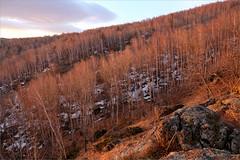 Прозрачный лес (Kirill & K) Tags: spring morning light sunlight forest wood birch tree nature landscape southernural mountain gadelsha snow весна утро свет восход лес берёзки деревья снег южныйурал сибай гадельша природа пейзаж