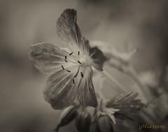 schwarz weiß (yvonneniessen) Tags: garten botanischergarten schwarzweiss frühling