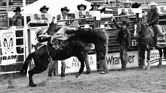 _PCR6945 (FunkyPepper) Tags: 16x9 bw clackandwhite cowboy horse rodeo
