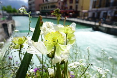 Old Town @ Annecy (*_*) Tags: may 2019 printemps spring morning matin annecy 74 hautesavoie france europe savoie city oldtown vieilannecy vieilleville