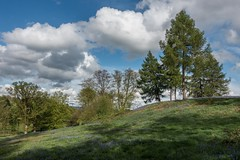 End of the trail (James Waghorn) Tags: surrey flowers sonyrx100m3 spring dorking tree deepdenetrail clouds england bluebells